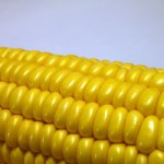 corn-mf-imelenchon-web