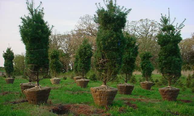 trees-holes
