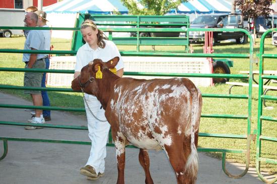 2014-fair-dairy-show-1