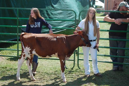 2014-fair-dairy-show-10