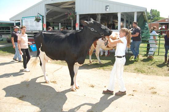 2014-fair-dairy-show-11
