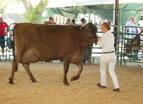 2014-fair-dairy-show-14