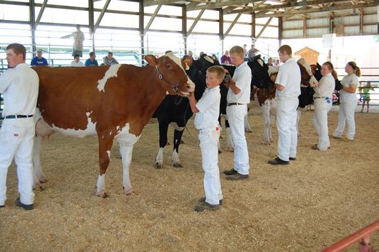 2014-fair-dairy-show-15