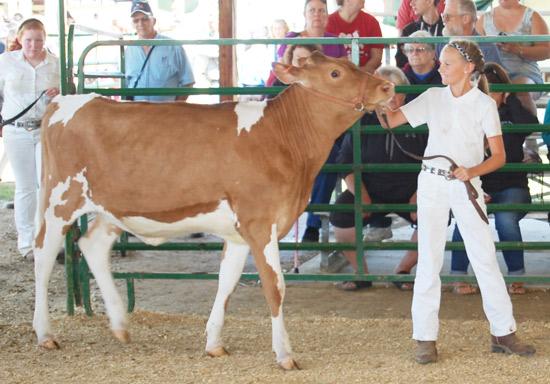 2014-fair-dairy-show-16