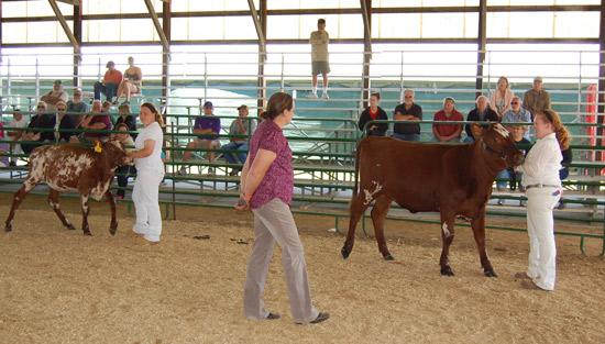 2014-fair-dairy-show-4