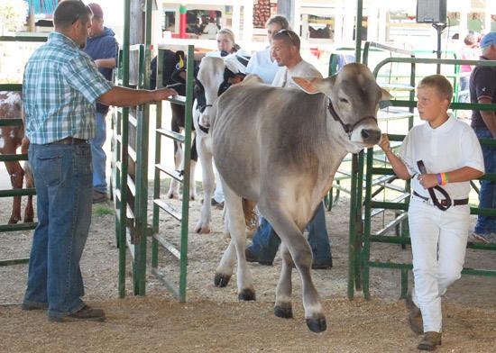 2014-fair-dairy-show-5
