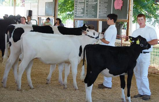 2014-fair-dairy-show-7