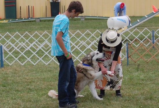 Kenosha County Dog Show