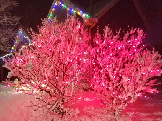 Snow and red Christmas lights on lilac bushes in Paddock Lake Sunday night. /westofthei.com photo