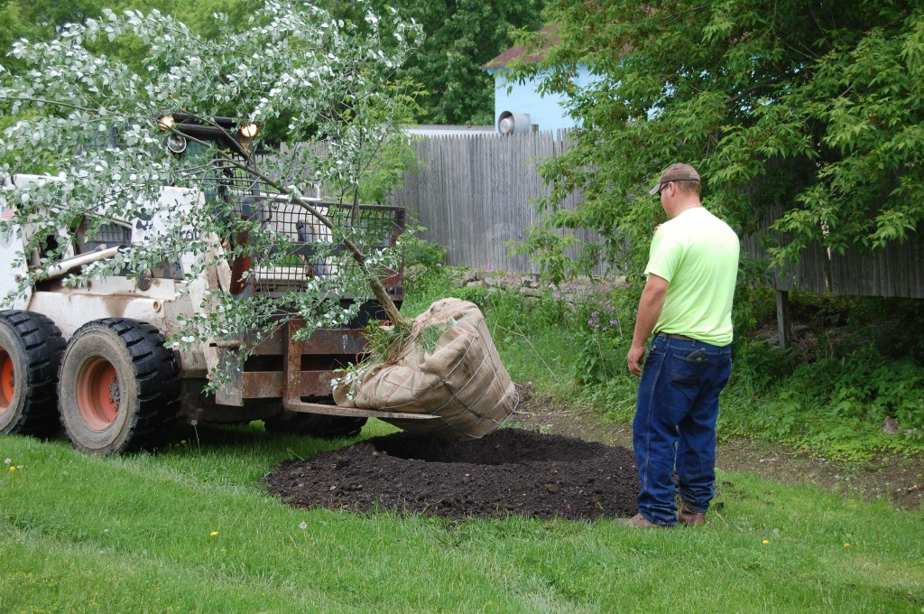 Bristol Public Works Department employees Wes Miner (in Bobcat) and D.C> Schroeder prepare to plant a tree in Veteran's Park friday morning. The town is planting new trees at Hansen and Veteran's parks.