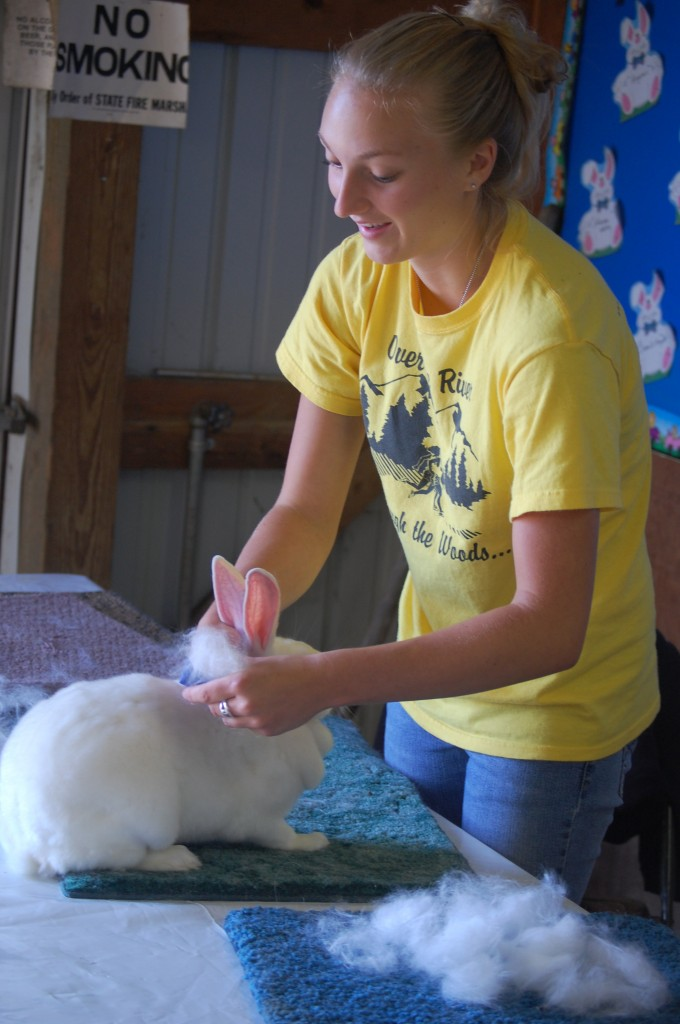 The rabbit show may not be until Friday, but that didn't stop Crystal Dowe from giving her rabbit a good brushing on Thursday.