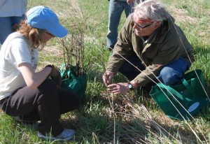 Ron Rasmussen explains to Tomena Scholze how to tell if a previously planted oak seedling is still viable.