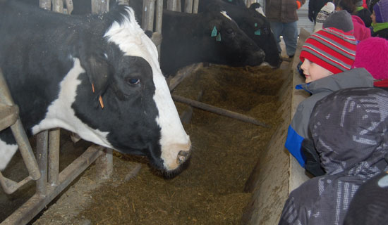 Weis cows get a look at Paris School students -- and vice versa.