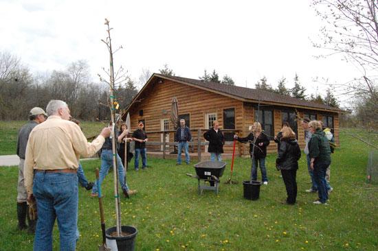 k-cabin-tree-plant-3