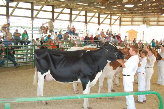 2014-fair-dairy-show-12