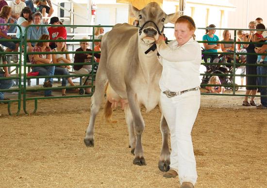2014-fair-dairy-show-13