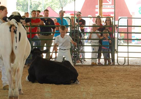 2014-fair-dairy-show-8