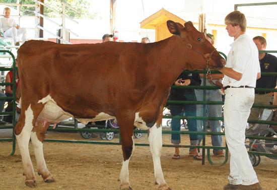 2014-fair-dairy-show-9