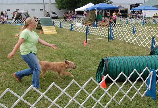 2014-fair-dog-show-top