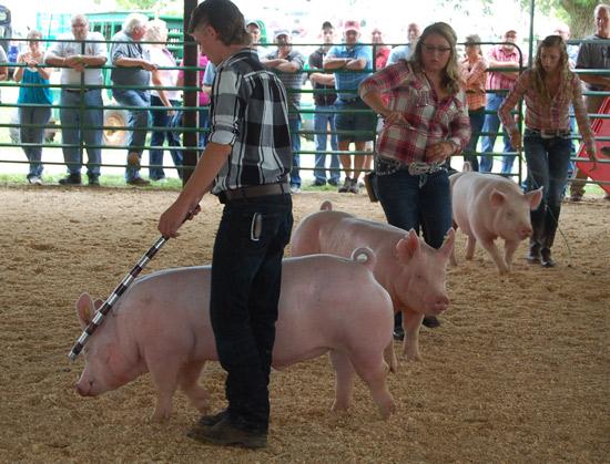 2014-swine-1