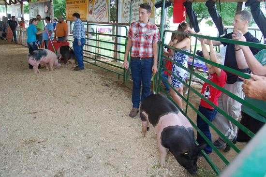 2014-swine-3