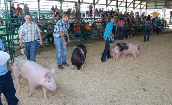 2014-swine-4