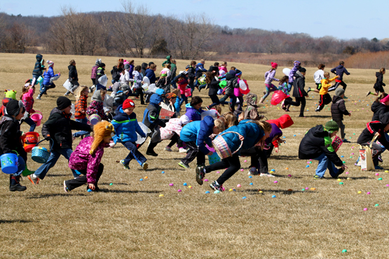 There were 4,000 eggs on the fields to be collected.