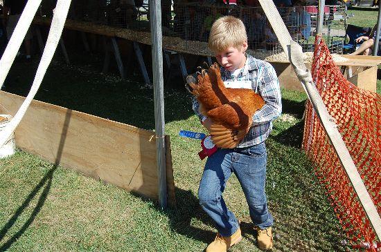 2016 fair poultry 10-opt