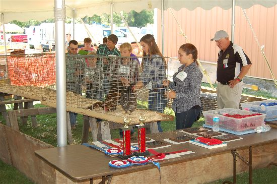 2016 fair poultry 6-opt