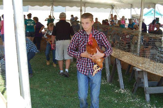 2016 fair poultry 9-opt