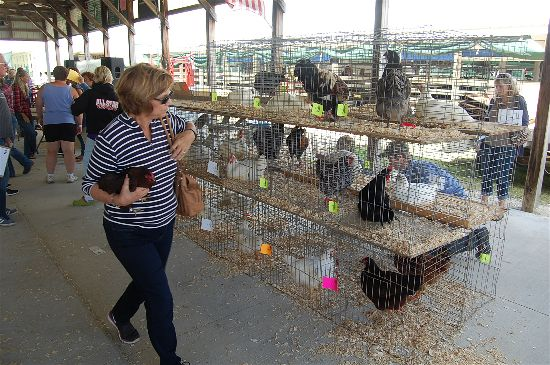 2016 small animal sale 2-opt