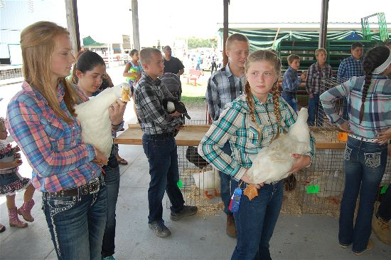 County Line Auto >> 2016 Kenosha County Fair Small Animal Auction coverage ...
